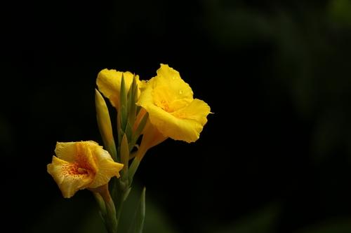 """农林科大""""追忆夏日畅想金秋""""植物摄影大赛优秀作品展"""